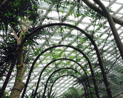 Projeto De Paisagismo – Especificação De Vegetação – 21, 22, 23, 24 e 25/09 – Presencial